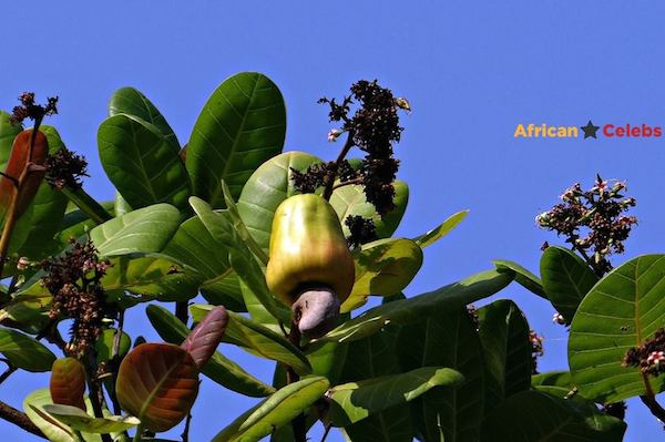 This Fruit Is Called ….