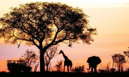 Africa Travel: Reasons Why Africa Should Be Your Next Holiday Destination